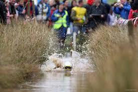 Bog snorkelling world championships